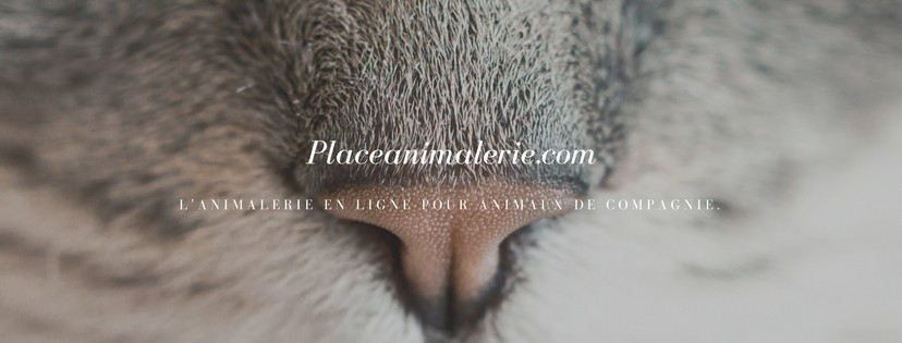 Place animalerie
